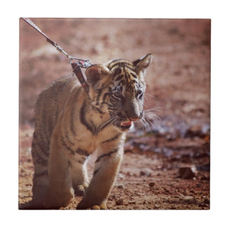 Tigre en un avance azulejo ceramica