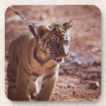 Tigre en un avance posavasos