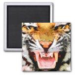 Tigre enojado - ojos del tigre iman de frigorífico