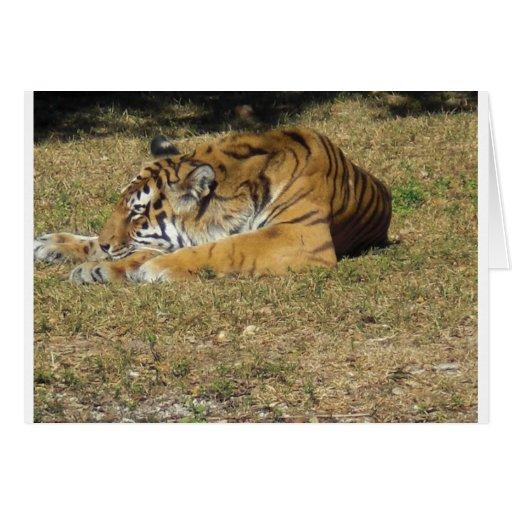 Tigre Felicitación