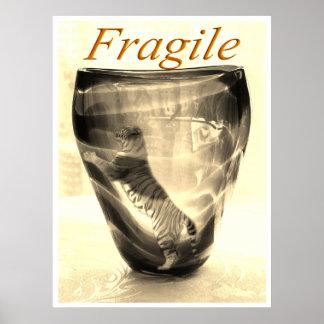 Tigre frágil póster