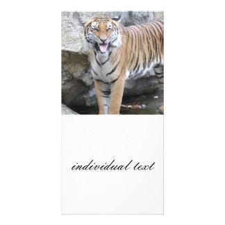 Tigre fuerte tarjetas fotográficas personalizadas