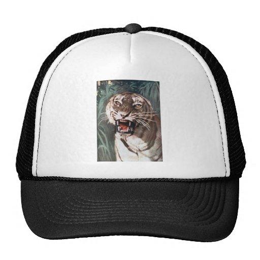 Tigre Gorras