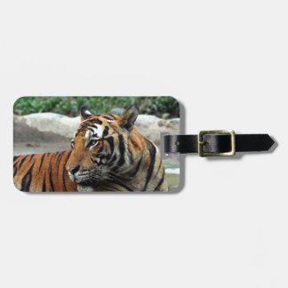 Tigre hermoso de Sumatran Etiquetas De Equipaje