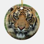 Tigre hermoso ornamento para reyes magos