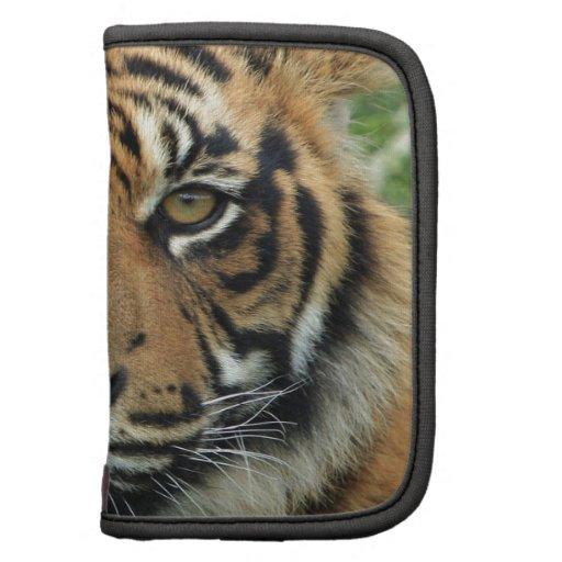 Tigre hermoso planificador