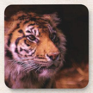 Tigre hermoso posavasos de bebida