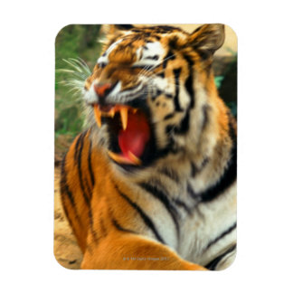 tigre imanes flexibles