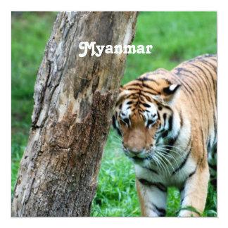 Tigre Invitación 13,3 Cm X 13,3cm