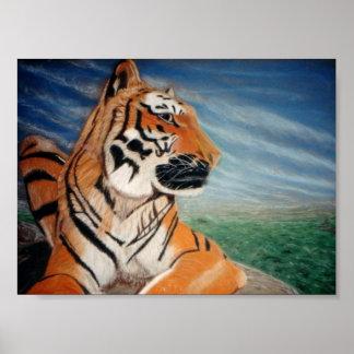 Tigre      joven del heredero 'que examina su doma póster