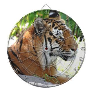 Tigre joven tablero de dardos