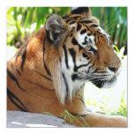 Tigre joven invitación personalizada