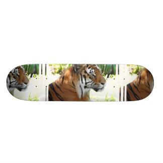 Tigre joven monopatín