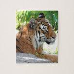 Tigre joven puzzle con fotos
