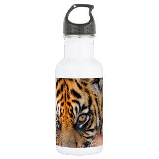 Tigre lindo Cub de Bengala