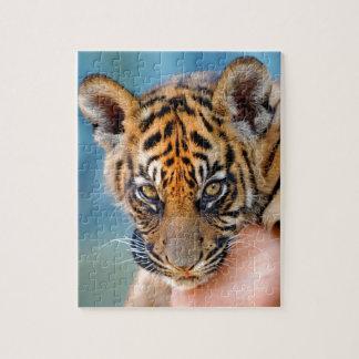 Tigre lindo Cub de Bengala Puzzles
