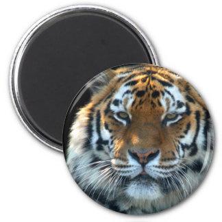 Tigre majestuoso de Sumatran Imán Redondo 5 Cm