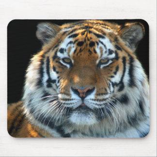 Tigre majestuoso de Sumatran Tapetes De Ratón