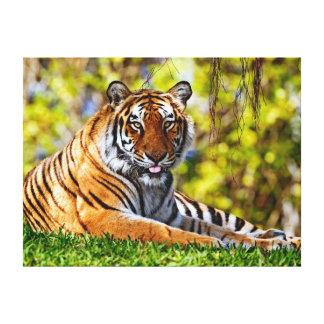 Tigre majestuoso impresiones en lona estiradas