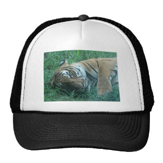 Tigre malayo gorros