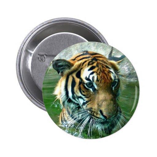 Tigre malayo pin