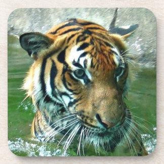 Tigre malayo posavaso