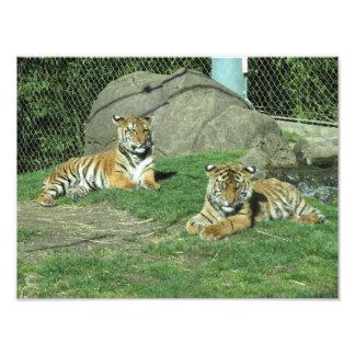 Tigre malayo y de Sumatran Cubs Fotografía