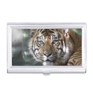 Tigre masculino de Sumatran (sumatrae del Tigris Cajas De Tarjetas De Visita