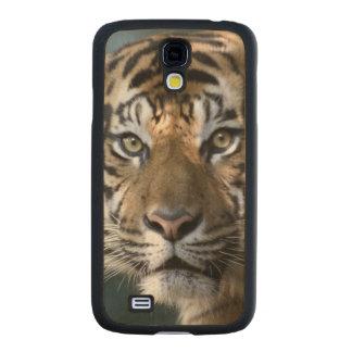 Tigre masculino de Sumatran (sumatrae del Tigris Funda De Galaxy S4 Slim Arce
