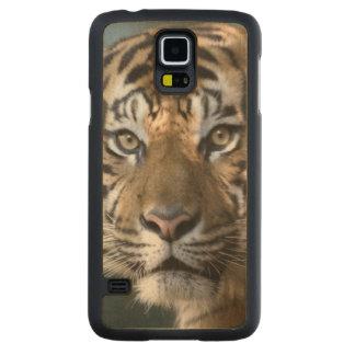 Tigre masculino de Sumatran (sumatrae del Tigris Funda De Galaxy S5 Slim Arce