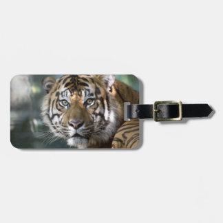 Tigre masculino de Sumatran (sumatrae del Tigris d Etiqueta De Equipaje