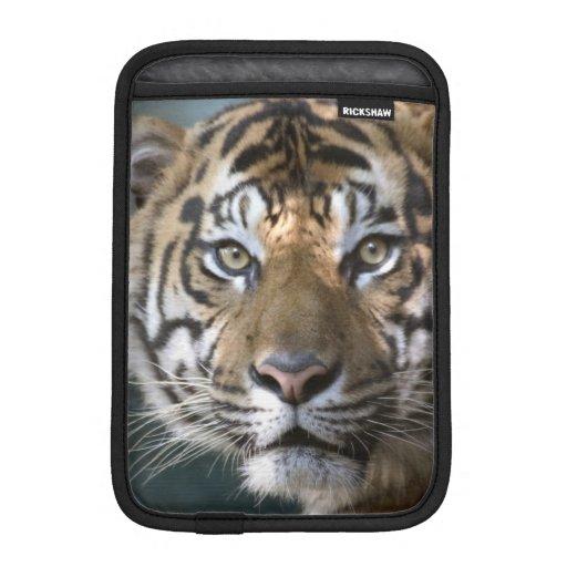 Tigre masculino de Sumatran (sumatrae del Tigris d Funda Para iPad Mini