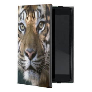 Tigre masculino de Sumatran (sumatrae del Tigris d iPad Mini Cárcasa