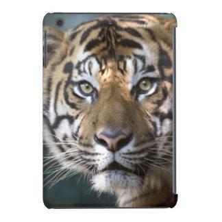 Tigre masculino de Sumatran (sumatrae del Tigris Fundas De iPad Mini
