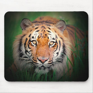 Tigre Mouse Pads