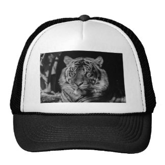 Tigre negro y blanco gorro de camionero