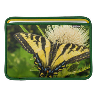 Tigre occidental Swallowtail en un cardo Fundas Para Macbook Air