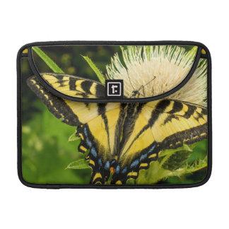Tigre occidental Swallowtail en un cardo Funda Macbook Pro