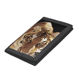 Tigre (Panthera el Tigris)