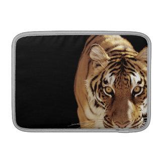 Tigre (Panthera el Tigris) Fundas Macbook Air
