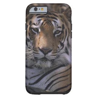 Tigre (Panthera el Tigris), primer de la cabeza, Funda De iPhone 6 Tough