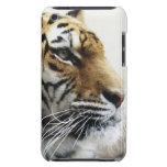 Tigre. Parque zoológico de Asahiyama, Hokkaido, Ja iPod Touch Carcasa