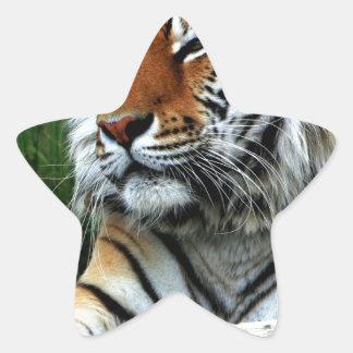 Tigre Pegatinas Forma De Estrella