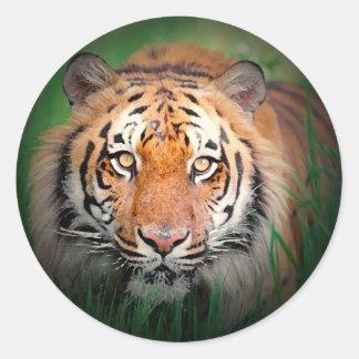 Tigre Etiqueta