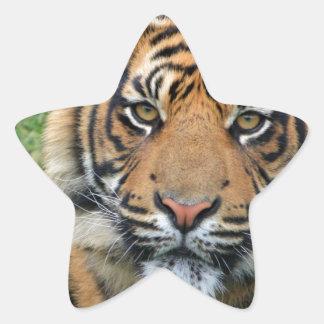 Tigre Calcomanías Forma De Estrellaes Personalizadas