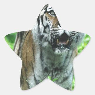 Tigre Calcomania Forma De Estrella Personalizada