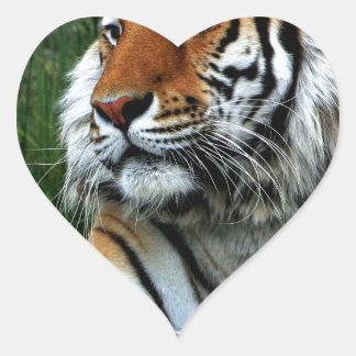 Tigre Calcomania De Corazon Personalizadas