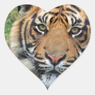 Tigre Calcomanía De Corazón