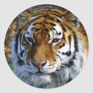 Tigre Pegatina Redonda