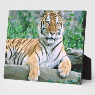 Tigre Placa De Madera
